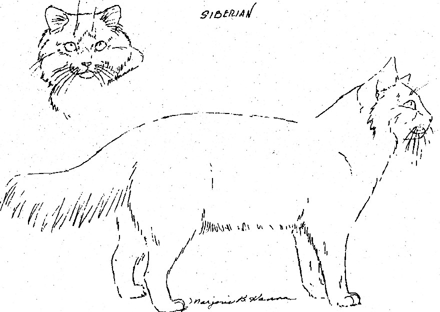 Siberian, Body and Head view
